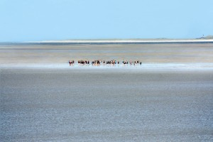 On the coastal mudflats