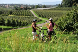 Cycling tour with a view of Lake Constance