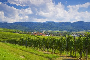 Experience the exceptional wines of the Baden Wine Route in the superb countryside between the Black Forest and the Rhine
