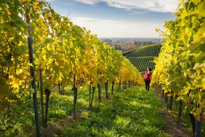 The wine paradise of Ortenau, Sasbachwalden: an ideal terroir for wine seekers