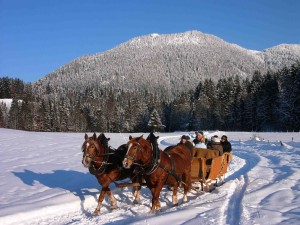 Horse-drawn sleigh in Lenggries