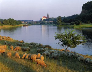 Evening view of the Elbe river in Meissen