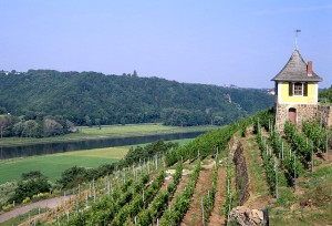The vineyard of the Saxon Wine Queen