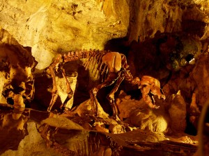 Skeleton in the Bears' Cave (Bärenhöhle) in Sonnenbühl
