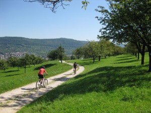 Cycling through orchards on the edge of the Swabian Alb
