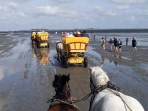 Carriage ride at low tide