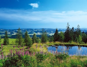 Bavarian Forest National Park