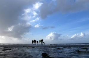 Lower Saxony Wadden Sea National Park