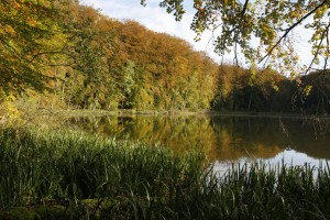 The interplay of woodland and water makes the nature park particularly scenic; the range of colours from green to yellow to red is especially impressive in the autumn.