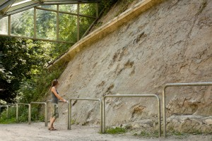 Dinosaur footprints, a highlight in the nature park and geopark