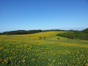 Meadow of flowers on the Bergisch Panorama Trail