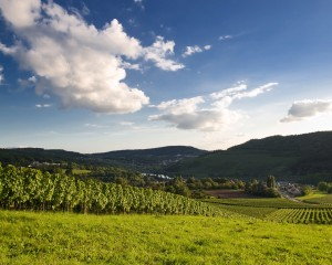 Saarland, Panorama of the vineyards