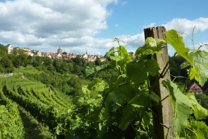 Rothenburg ob der Tauber: grapevine, Rothenburg skyline in late summer