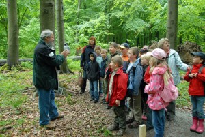 Learning about the environment with a ranger in Hainich National Park